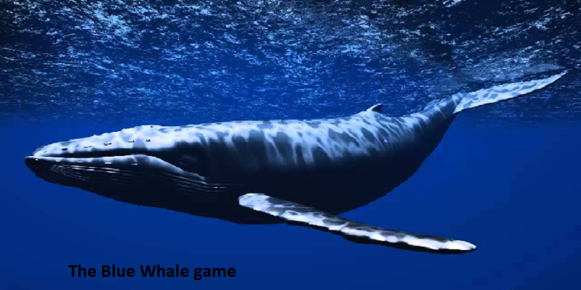 The Blue Whale or The Blue Whale Challenge